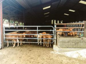 Chez les Remezy, l' élevage Bio