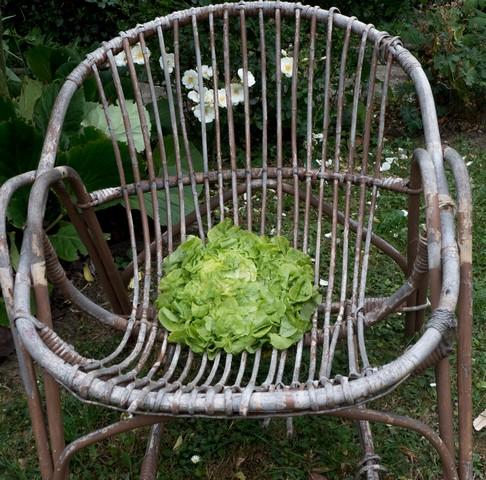 le truc pour conserver la salade longtemps cocori mag. Black Bedroom Furniture Sets. Home Design Ideas